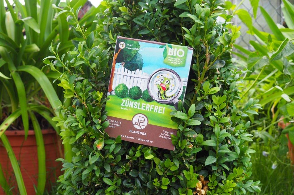Plantura Zünslerfrei XenTari® in einem Buchsbaum
