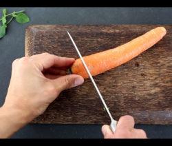 Abfälle Der Karotte Möhre Vermehren Und Bewurzeln
