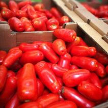 Rote Eiertomaten In Kisten