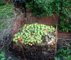 Fallobst Auf Komposthaufen