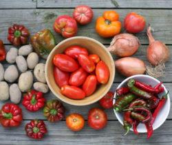 Im Freiland Angebaute Tomaten, Chili, Paprika, Zwiebeln Und Kartoffeln