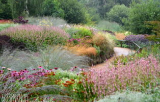 Die top 10 der besten pflanzen f r ein hochbeet plantura for Piet oudolf pflanzen