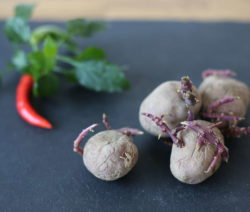 Gemüseabfall Kartoffel Mit Trieben Wieder Verwenden
