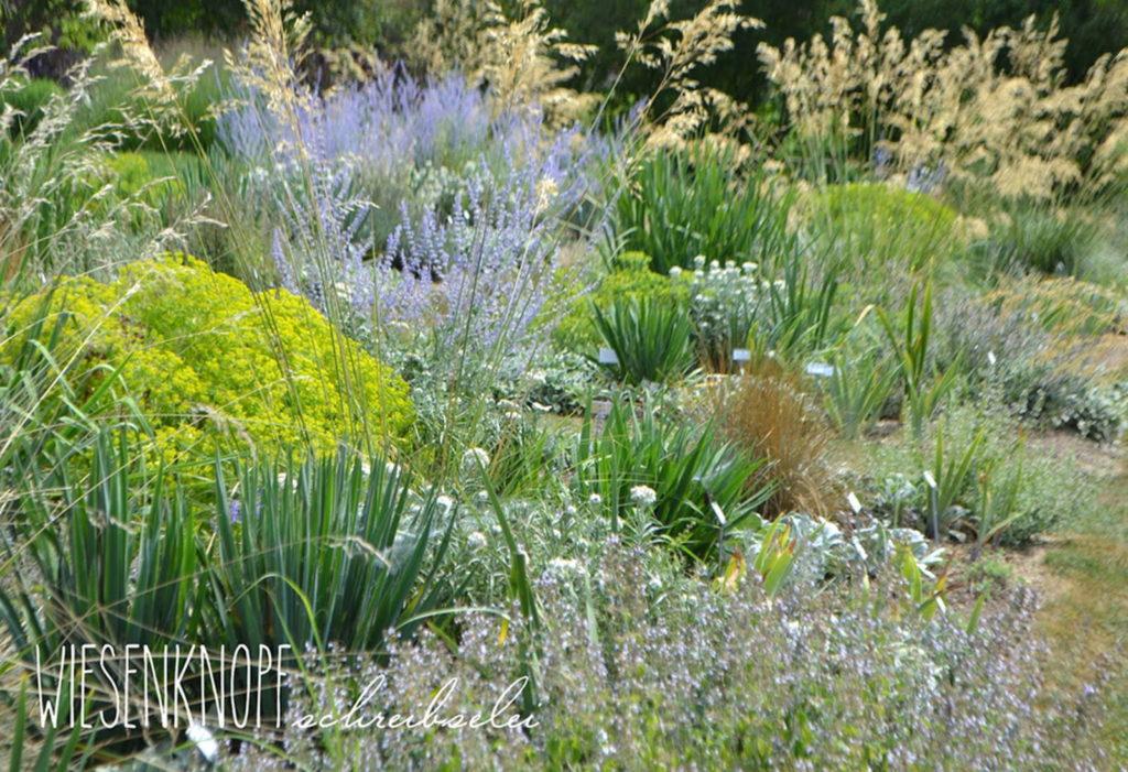 Gartenbeet mit verschiedenen Pflanzen