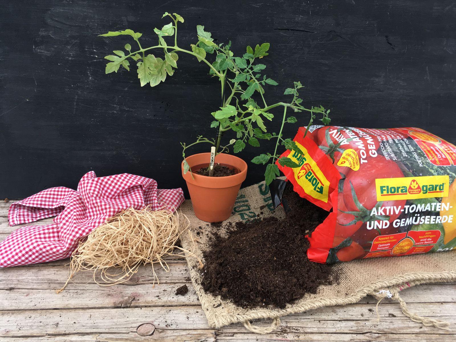 Tomaten Anbau Auf Terrasse Und Balkon Plantura