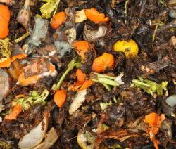 Küchenabfälle Aus Komposthaufen