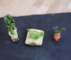 Recyceltes Gemüse Romanasalat Chinakohl Und Karotte