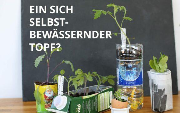 Anzucht von Jungpflanzen in recycelten PET-Flaschen
