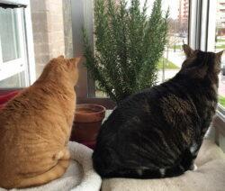 Rosmarin Fensterbank Katzen