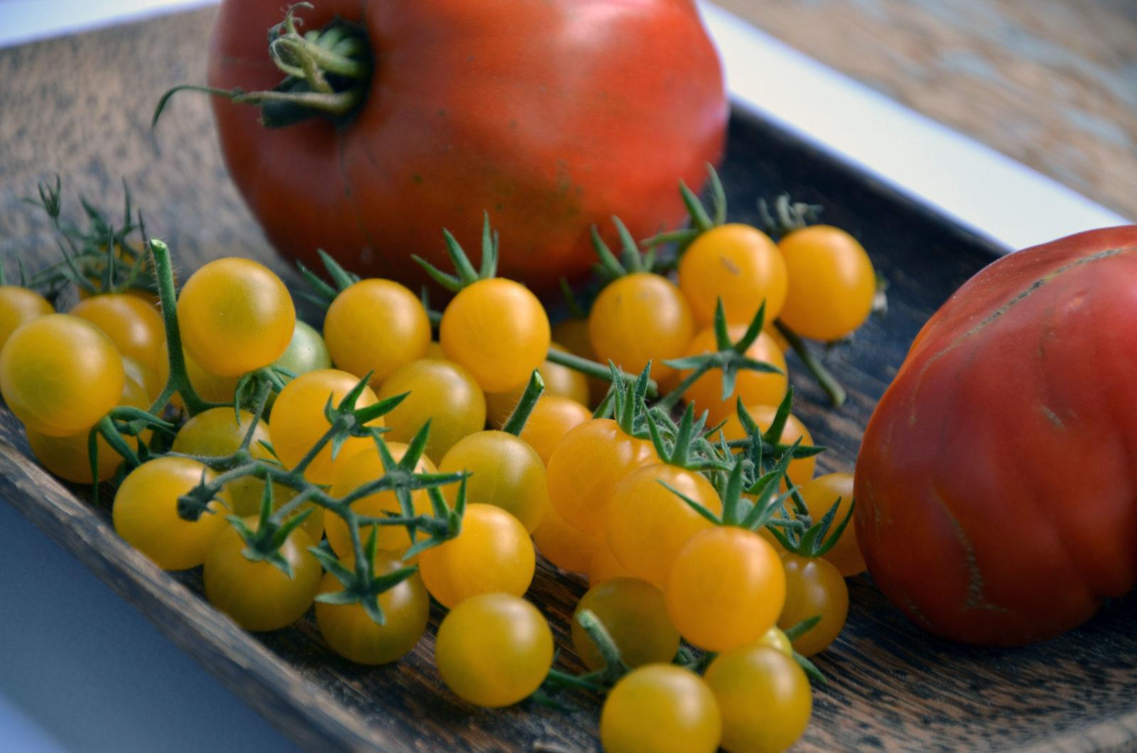 tomaten saatgut gewinnen und aufbewahren plantura. Black Bedroom Furniture Sets. Home Design Ideas