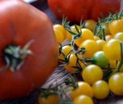 Saatgut Von Eigenen Tomaten Gewinnen