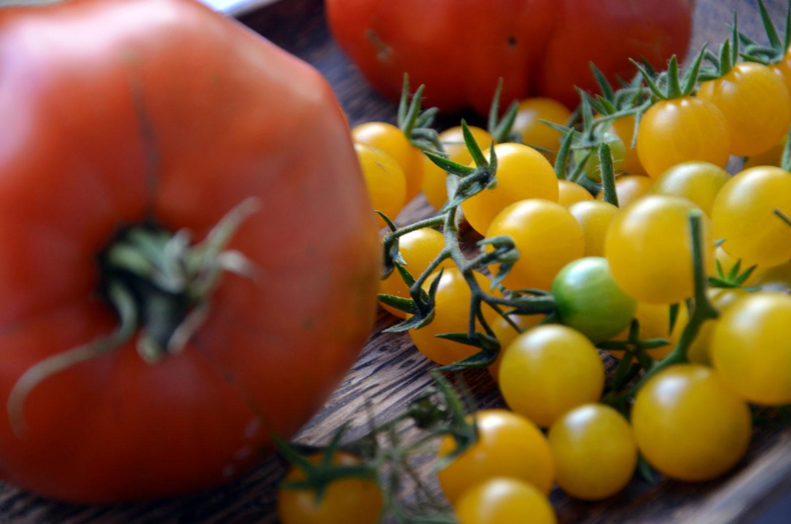 tomaten auss en pikieren und auspflanzen plantura. Black Bedroom Furniture Sets. Home Design Ideas