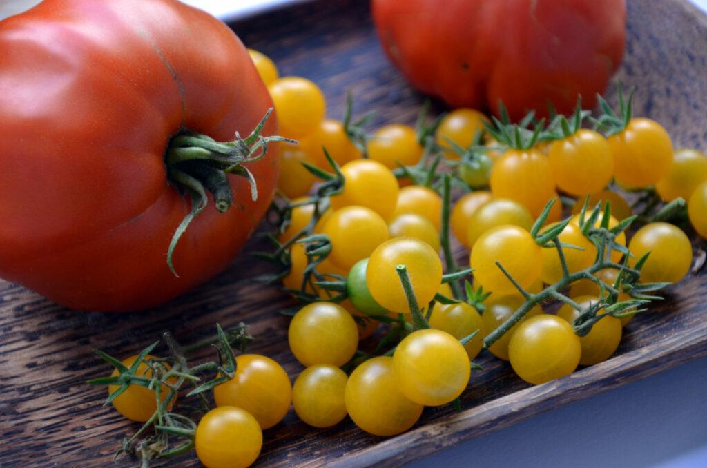 gelbe Cocktailtomaten und große rote Fleischtomate aus dem eigenen Garten