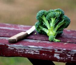 Selbst Geernteter Brokkoli
