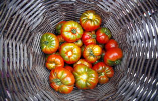 Tomaten Frisch Geerntet In Korb Lagern