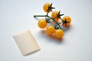 Tomatensamen Selber Gewinnen