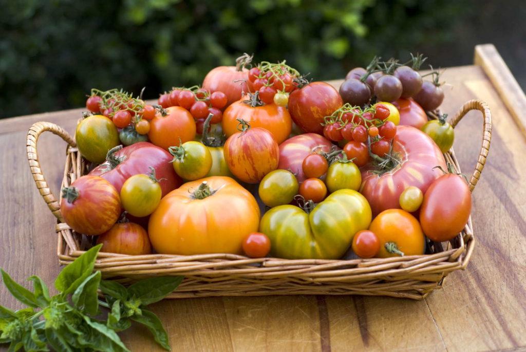 verschiedene Tomaten in Korb auf Tisch