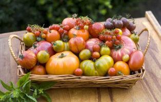 Tomatensorten: Die 50 Besten Altbewährten & Neuen Sorten