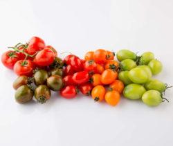 Tomaten Kleine Sorten Rot Grün Orange