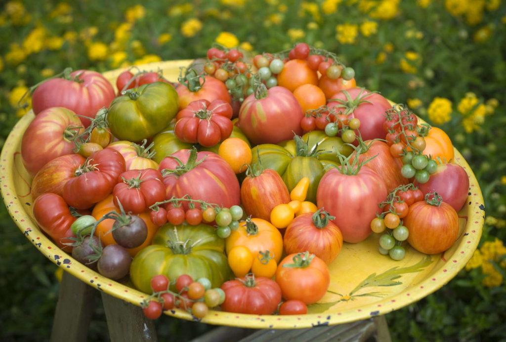 Tomatensorten klein groß Fleischtomaten Cocktailtomaten Buschtomaten Strauch tomaten tomaten auf Teller