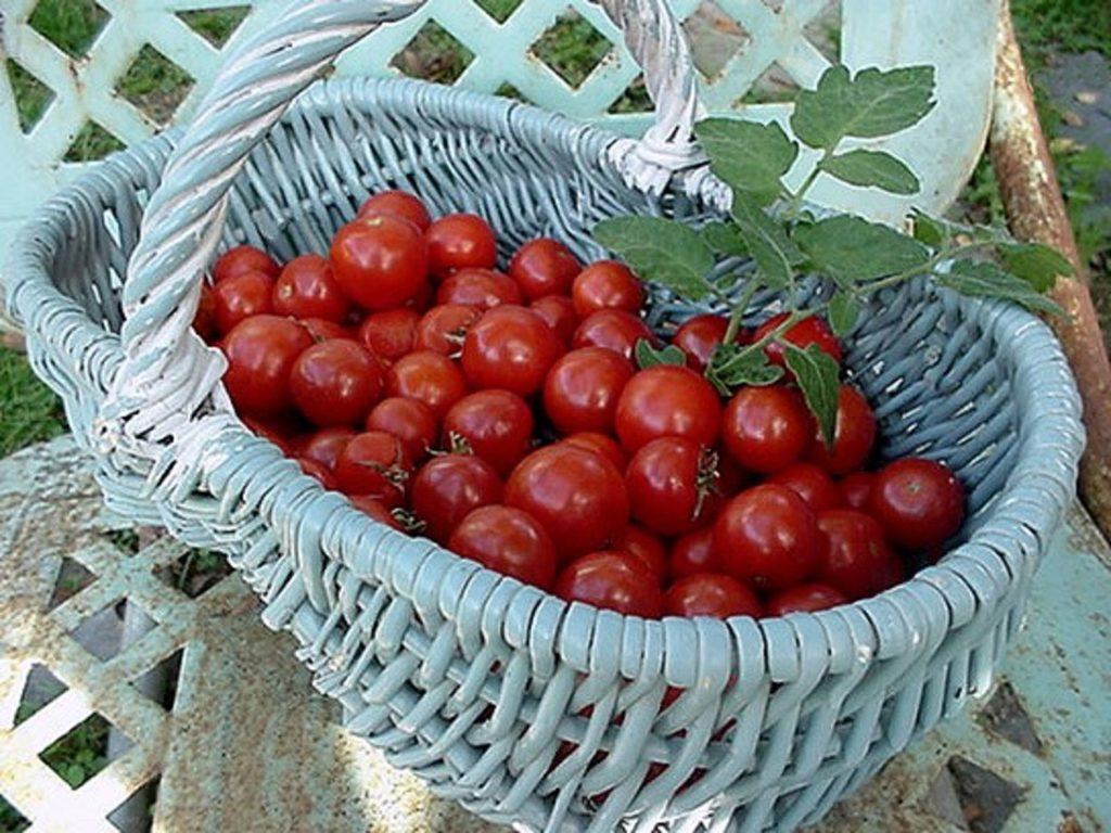 Korb voll mit roten kleinfruchtigen Tomaten