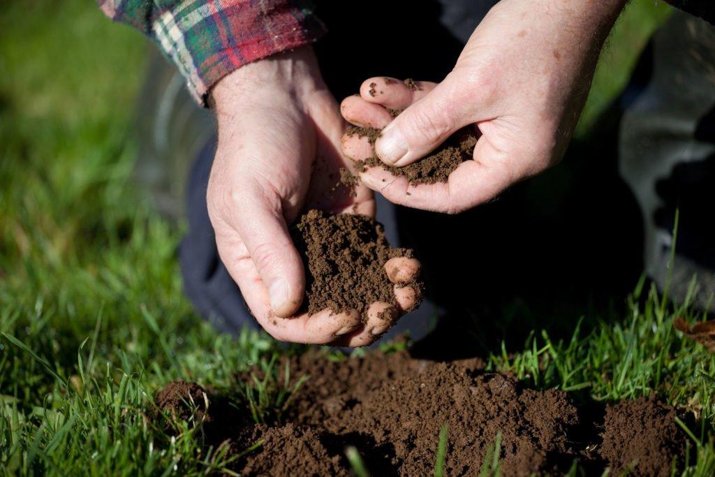 Hand hält Gartenerde