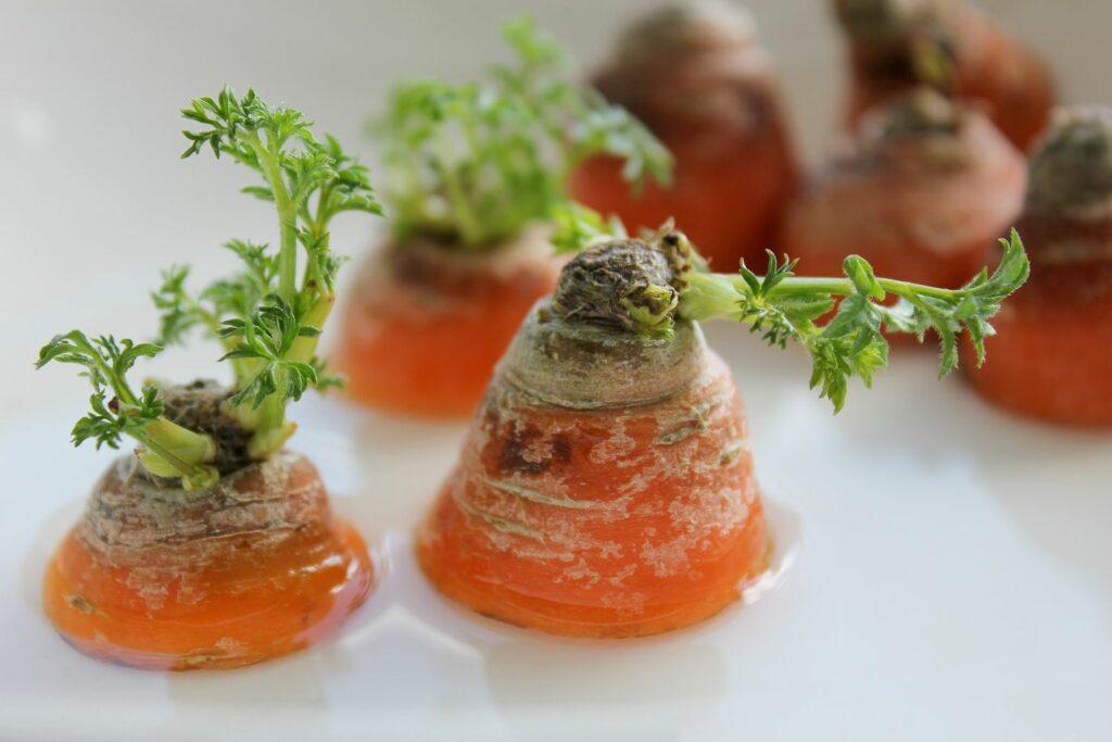 ausgetriebene Karotten