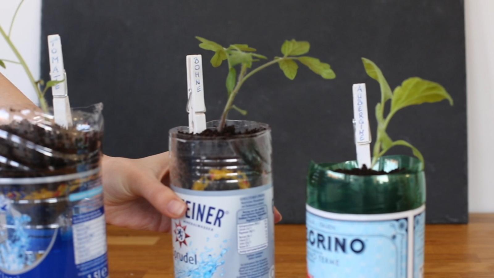 anzucht von jungpflanzen in recycelten pet flaschen plantura. Black Bedroom Furniture Sets. Home Design Ideas
