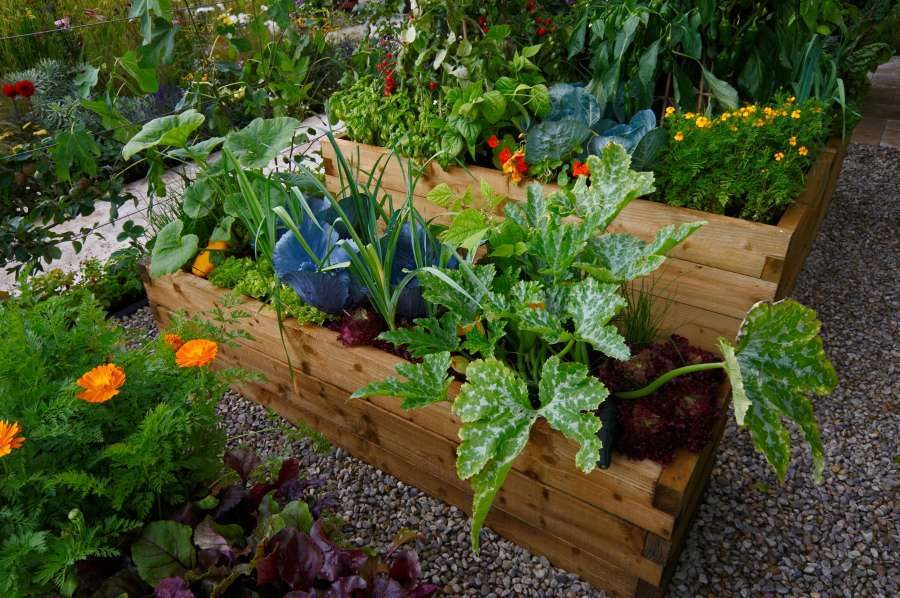Tomatenpflanzen in einer Mischkultur