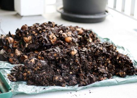 Unfertig Kompostierte Küchenabfälle