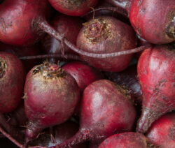 Rote Beete-Knollen