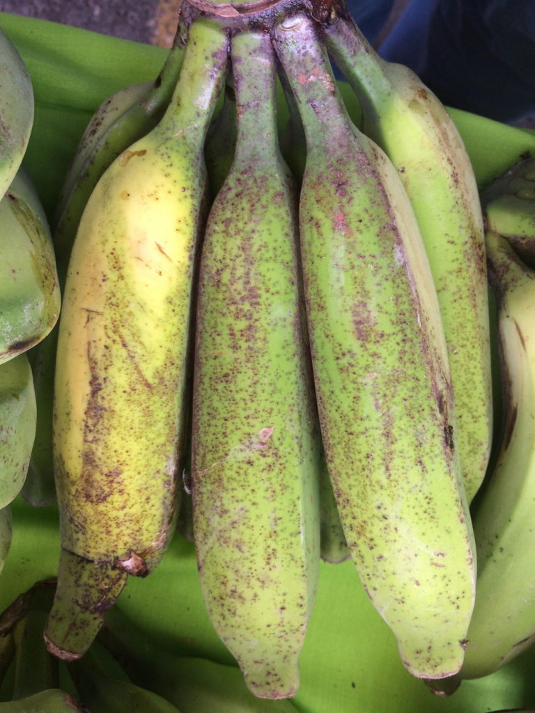 Thrips Symptom Banane gelben silbrig-grauen Sprenkelungen