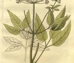 Botanik Giersch