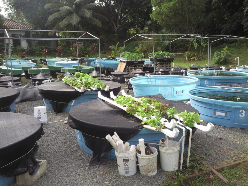Aquaponik Fischbecken