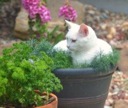Katze Im Dill