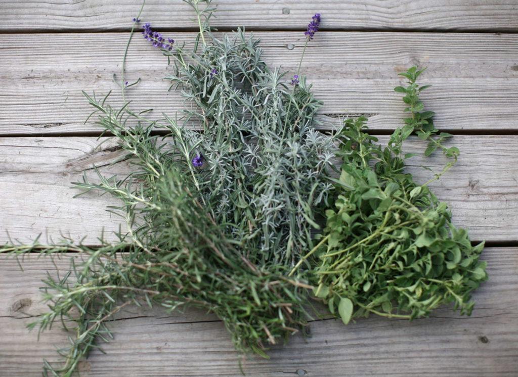Lavendel Kräuter der Provence