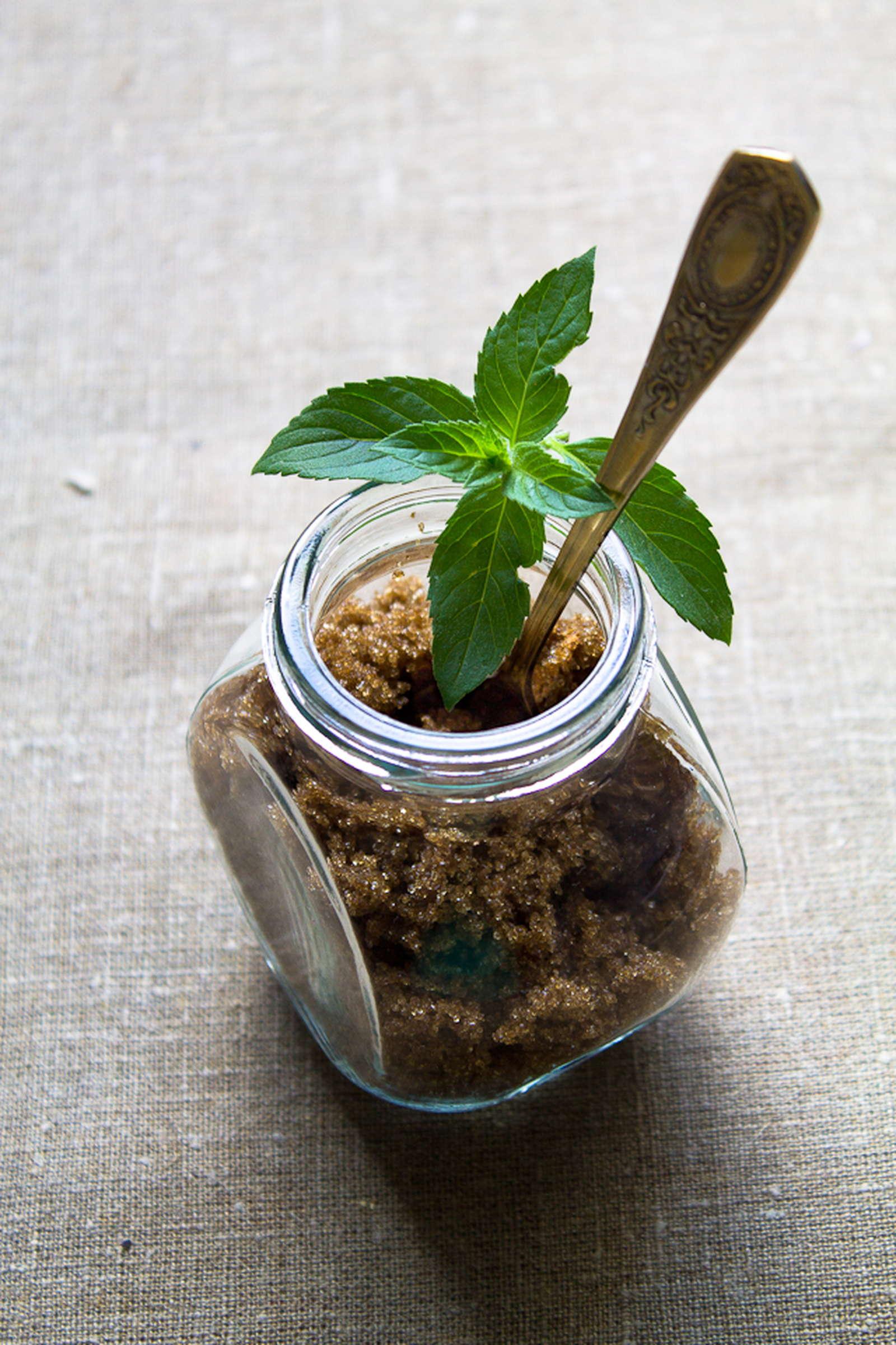 Lieblings Pfefferminze: ernten und verwenden - Plantura #ZH_17