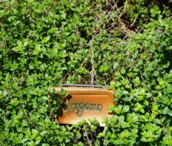 Oregano Im Garten Anbauen Mit Tonschild