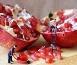 Samenstände Vom Granatapfel
