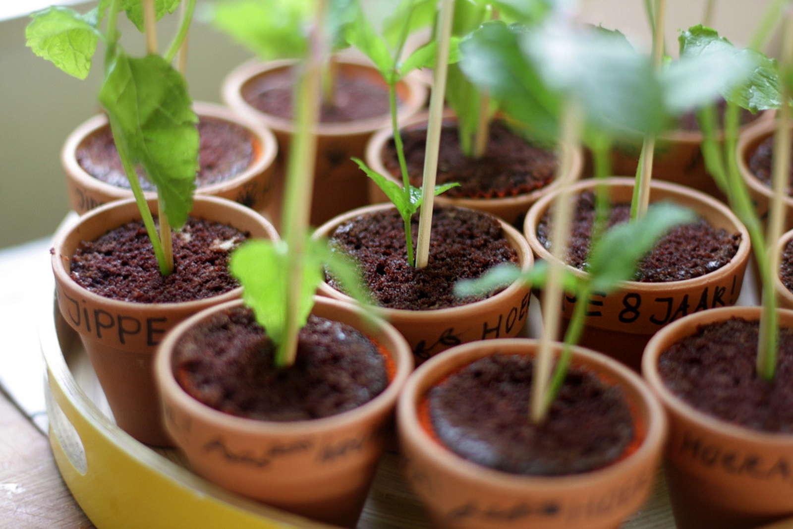 Pfefferminze So Klappt Der Anbau Im Eigenen Garten Plantura