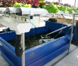 Kleine Aquaponik-Anlage