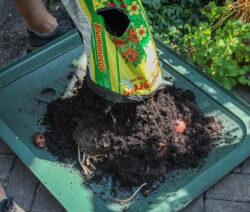 Kartoffeln Im Pflanzsack Ernten