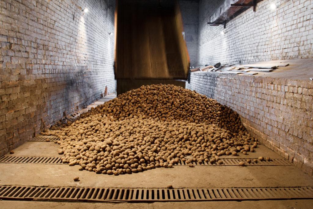 gewerbliches Einlagern von Kartoffeln
