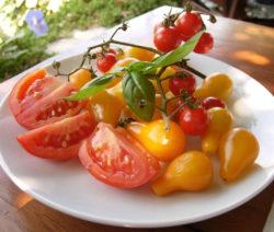 Basilikum Mit Roten Und Gelben Tomaten
