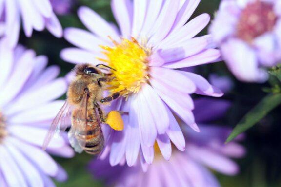 Rettet die Bienen! Im Gespräch mit nearBees aus München