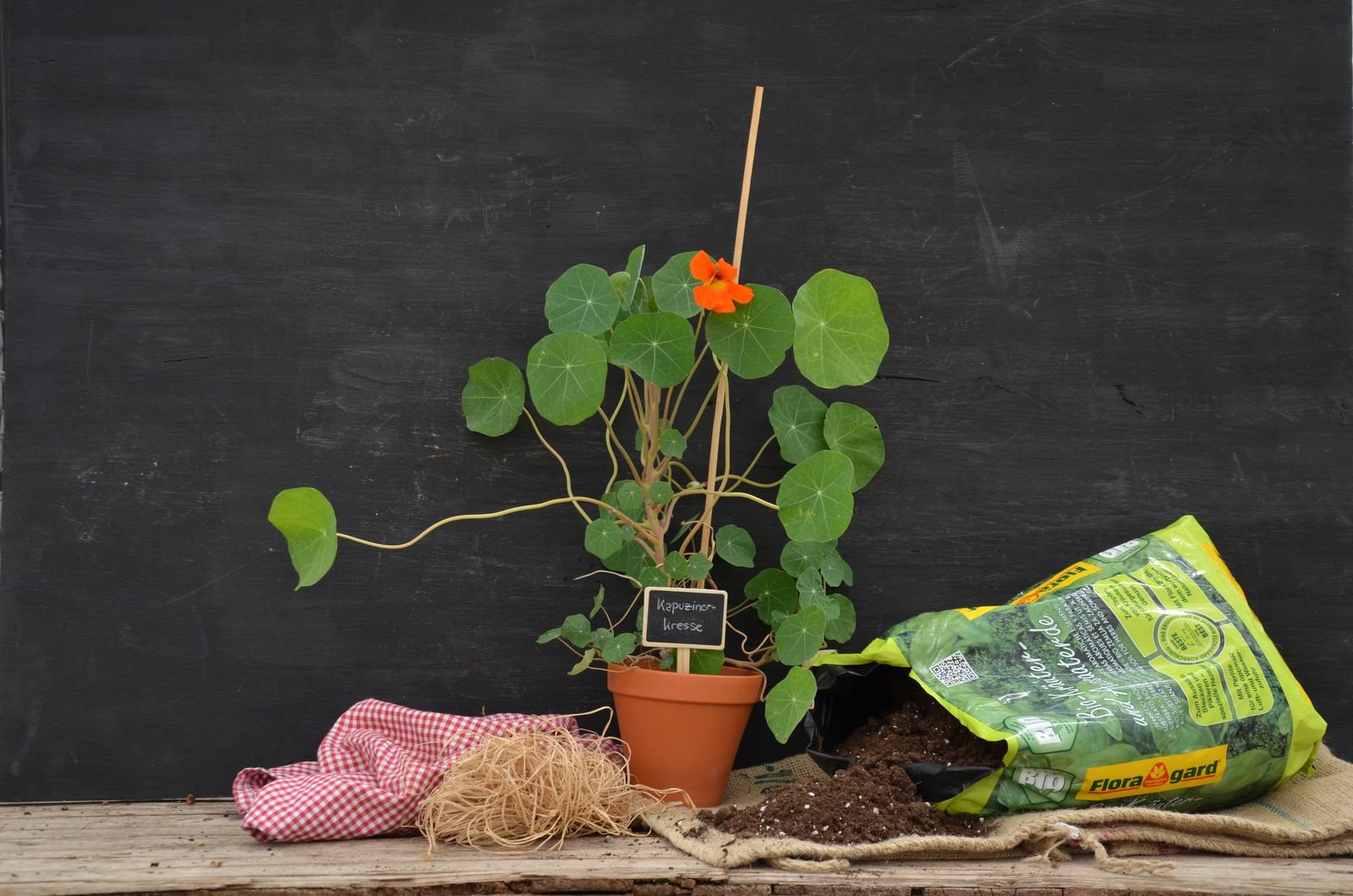 Kapuzinerkresse Anbauen