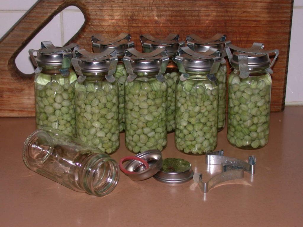 Kapuzinerkresse Samen und Knospen einlegen wie Kapern