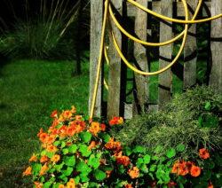 Kapuzinerkresse Mit Blüten An Einem Zaun Im Garten