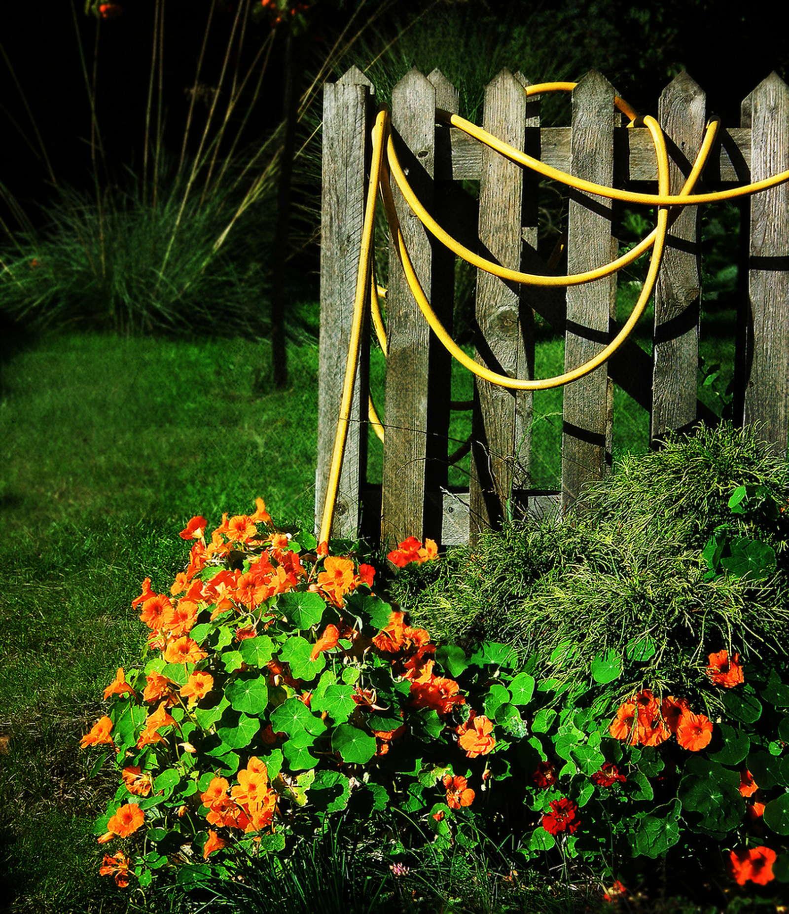 kapuzinerkresse sorten und artenvielfalt plantura. Black Bedroom Furniture Sets. Home Design Ideas