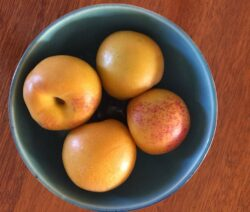 Nectacots In Schale